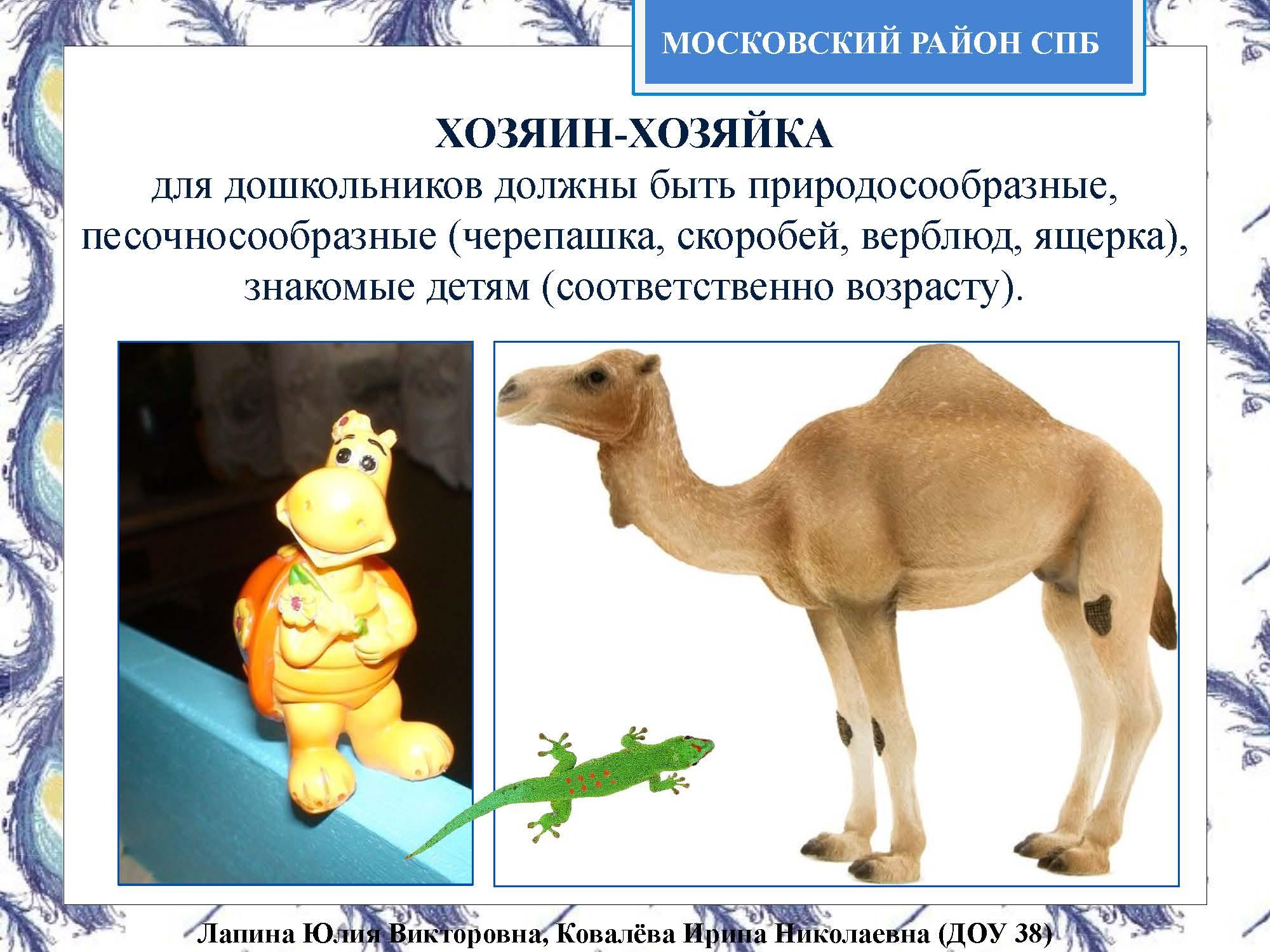 Секция 8. ДОУ 38, Московский район_Страница_18